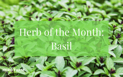Herb of the Month: Basil