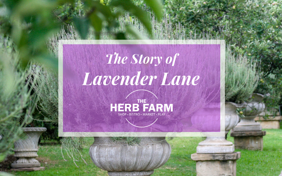 The story of Lavender Lane